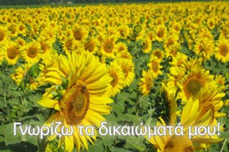 summer_sun.jpg